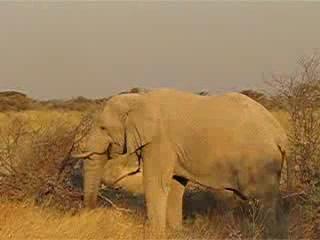 Etosha National Park, นามิเบีย: Waterhole video