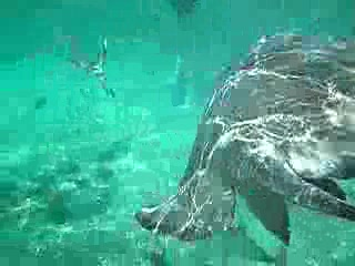 Ambergris Caye, Belize: Shark Ray Alley in Belize