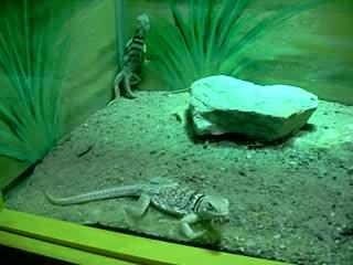 National Mississippi River Museum & Aquarium: Jumpy Lizards
