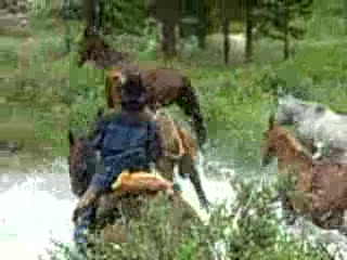Covered Wagon Ranch Wranglers Riding Horses Up the Mountain