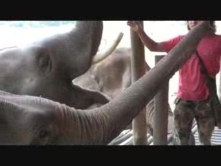 เมืองเชียงใหม่, ไทย: Elephant Nature Park