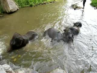Chiang Mai, Tayland: VIDEO: babies playing in the water