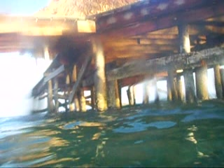 Melia Cayo Guillermo : Snorkeling under the Pier, Many Fish to see