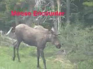 Bow Valley Provincial Park: Moose Encounter