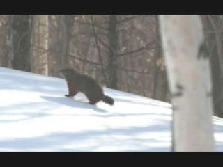 Northeast Kingdom Wildlife
