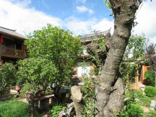 The Bruce Chalet - Garden