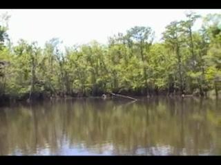 Becks Lake Fish Camp and Farm Bayou Cruise