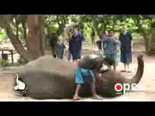 Baanchang Elephant Park - Private Day Tours: Baanchang Elephant Park