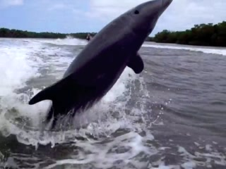 Capt. Ron's Awesome Everglades Adventures: Dolphin anyone?