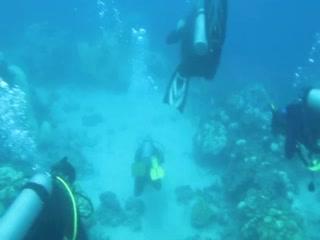 Аруба: Aruba