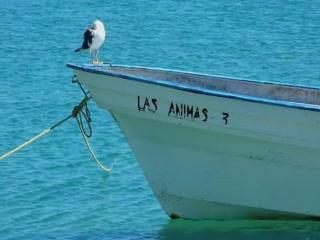 Las Animas guest 2010