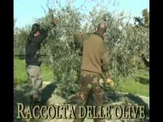 Vicchio, إيطاليا: Villa Campestri: l'Olio d'oliva ha il suo Resort