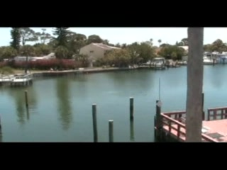 Bay Palms Waterfront Resort - Hotel and Marina: Dolphin Sighting at The Bay Palms Waterfront Resort