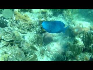 West Bay Roatan Snorkle