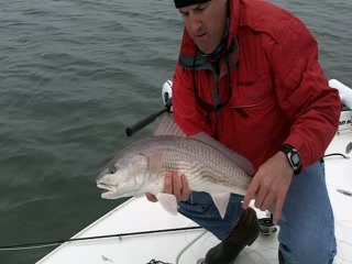 Carolina Backwaters Fishing Charters: Charleston Red Fish on the fly