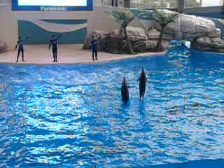 Hualien FarGlory Hotel: Ocean Park dolphin show