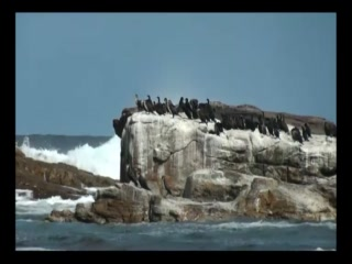 Table Mountain Hermanus Cape Boulders Beach