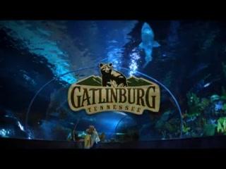 Gatlinburg, TN: Ripley Aquarium of the Smokies