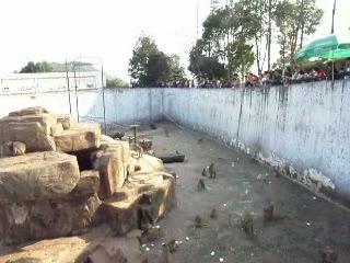 Wenzhou Zoo: People throwing food at monkeys