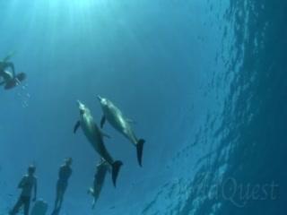 WildQuest: swim with dolphins