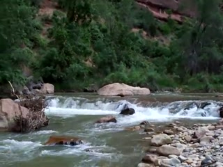 Virgin River and Zion Canyon Video