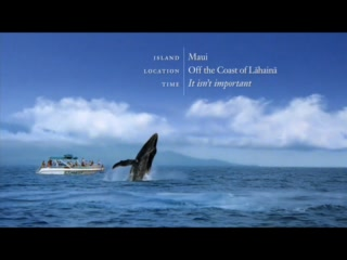 Hawaii: Whale Watch