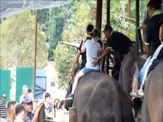 Temerloh District, Maleisië: Elephant Sanctuary