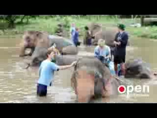 Baanchang Elephant Park - Private Day Tours: Baan Chang Elephant Park
