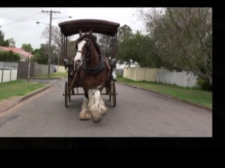 Morpeth Horse Carriage: Juliet the horse in Morpeth
