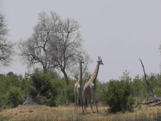 Linyanti Reserve, Botswana: Linyanti