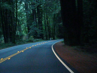 Drive through Navarro River Redwoods State Park