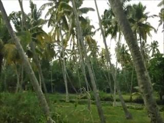 Alappuzha, India: One day tour of Alleppey, Kerala
