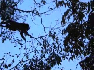 Aqua Wellness Resort: Despedida con MONOS!  The Monkeys said goodbye!