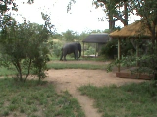 Shindzela Tented Camp: Elephants