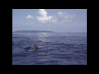 Hanging with the Divine Dolphins in Drake Bay, Costa Rica