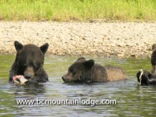 Bella Coola Mountain Lodge: Spectacular