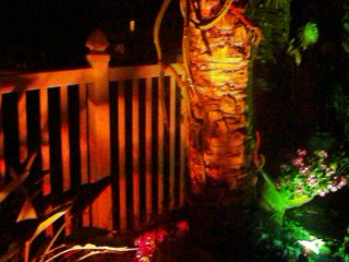 Crane Creek Inn Waterfront Bed and Breakfast: Night Blooming Cirrus