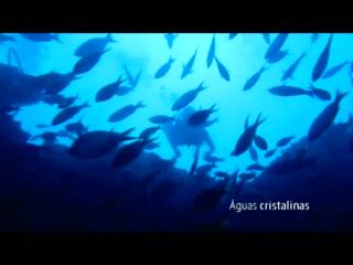 Mergulho em Maceió com a Let's Dive