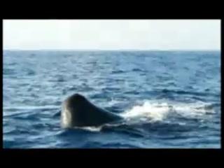 Unawatuna, Sri Lanka: Mirissa Whale watching - find the Whales around the area