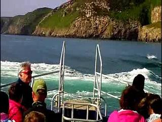 Ramsey Island Boat Trips -Thousand Islands Expeditions: Ramsey Sound, Ramsey Island and Skomer Island