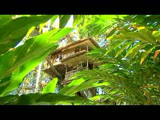 tree house periyar