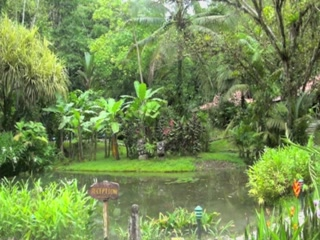Esquinas Rainforest Lodge by day