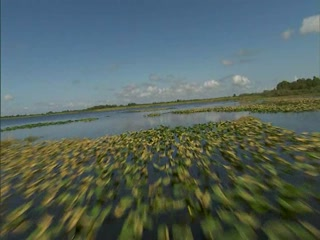 Spirit of the Swamp Airboat Rides: Ever wonder what it feels like to ride an airboat?