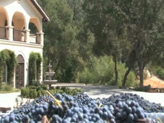 Placerville, Califórnia: David Girard Vineyards