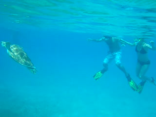 Water Island, St. Thomas: Turtle encounter