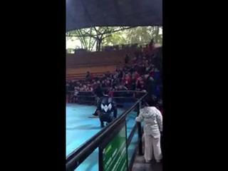جوانجتشو, الصين: bear and Boy shootout