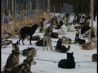 Chenil La Poursuite: Dog Sledding Near Quebec City