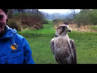 Duncan, Canadá: Falcon