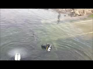 Doolin Ferry: Dusty the Doolin Dolphin