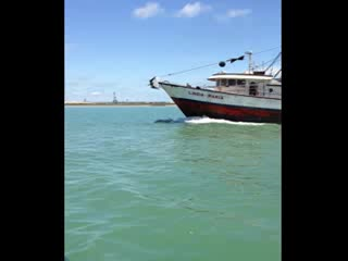 Port Isabel, Teksas: Watching the dolphins